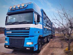 DAF XF 95 480 livestock truck + livestock trailer